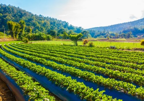 Agronegócio é pilar para reconstruir economia brasileira pós-coronavírus
