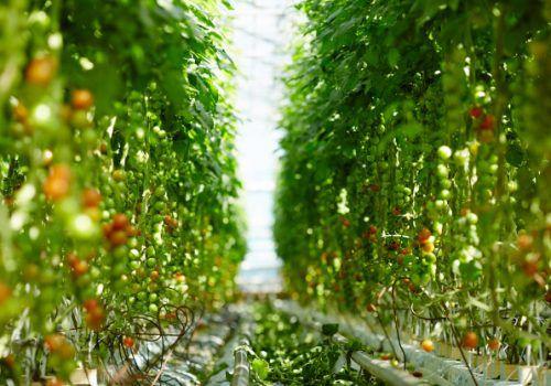 Curso para profissionais do agronegócio oferece diplomas no Brasil e França