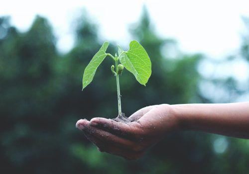 Revista RI: Relato integrado como resposta ao ESG?